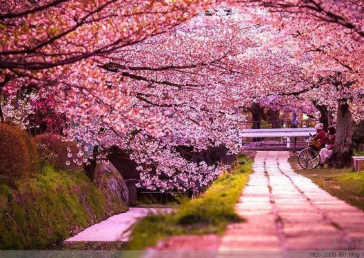 树花、树景、太美了!百看不厌~